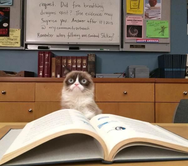 Grumpy Cat Frown