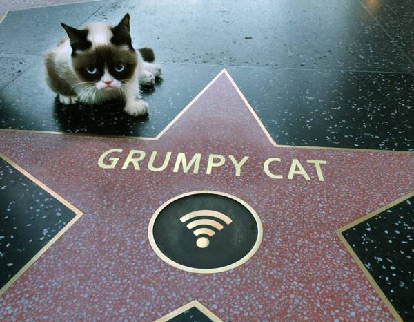 Grumpy Cat Hollywood Star