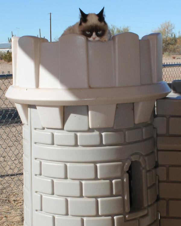 Grumpy Cat In A Fortress