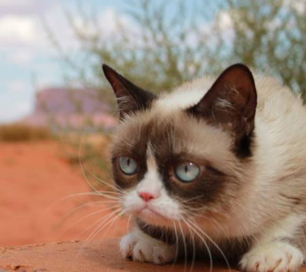 Grumpy Cat In Arizona