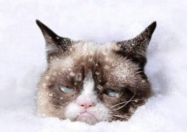 Grumpy Cat In Snow