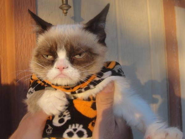 Grumpy Cat Photos