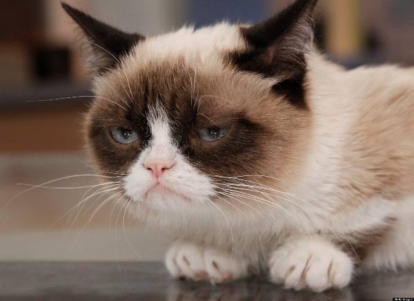 Grumpy Cat Pictures Face