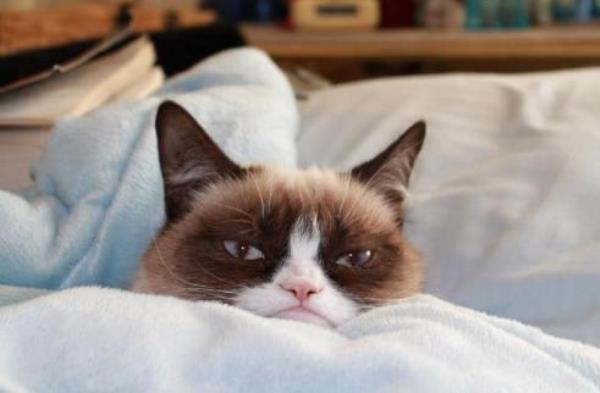 Grumpy Cat Pictures Resting