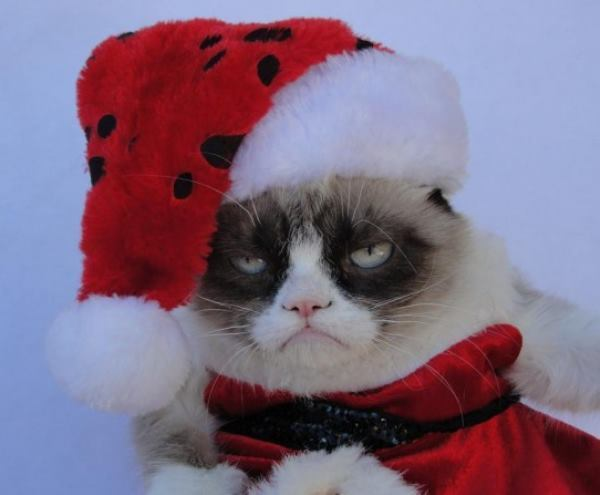 Grumpy Cat Pictures Santas Hat