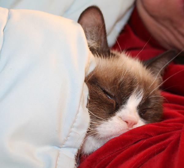 Grumpy Cat Pictures Sleeping