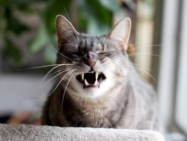 Hilarious Sneezing Cats