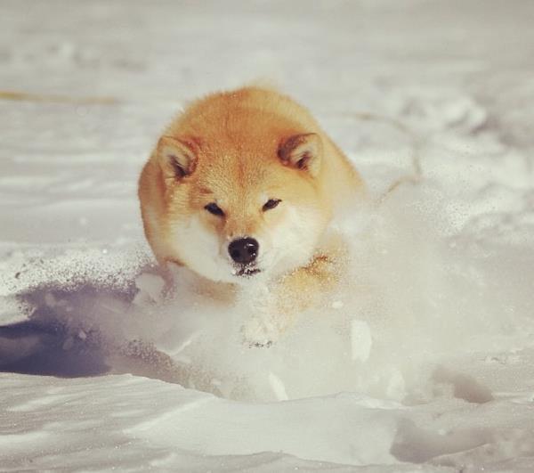 Maru In The Snow
