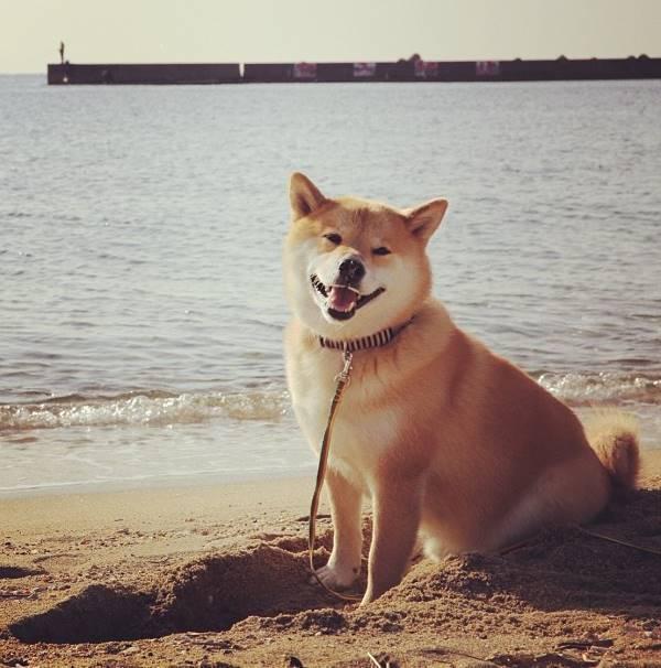 Maru On The Beach