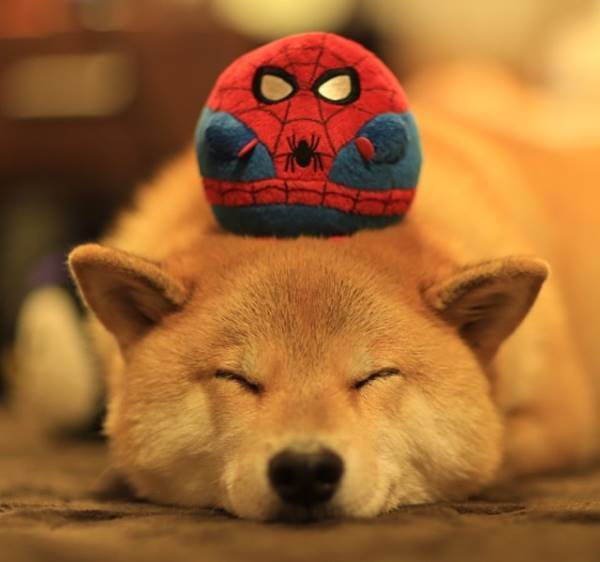 Most Popular Dog On Instagram Marutaro