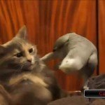 Parrots Annoying The Crap Out Of Cats