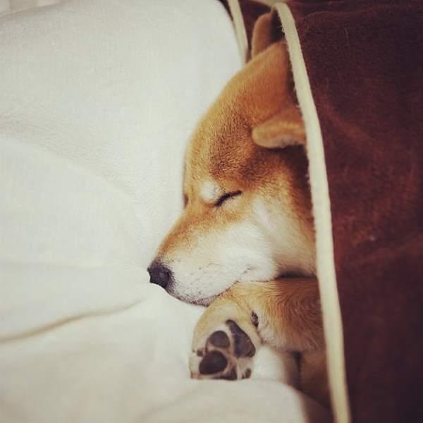 Sleeping Marutaro