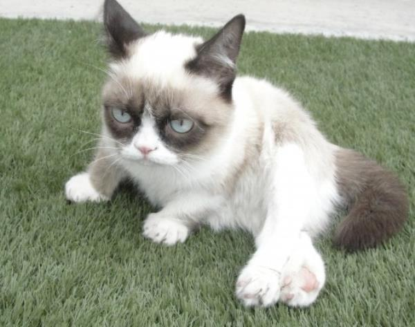 The Forty Cutest Grumpy Cat Pictures Tardar Sauce