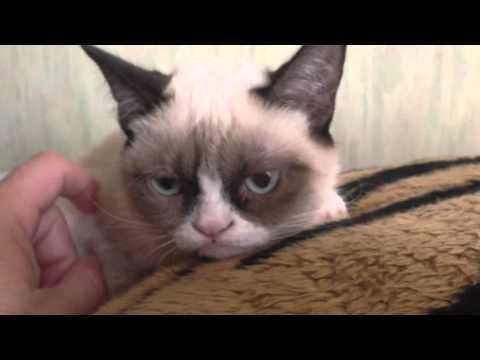 Grumpy Cat Picture