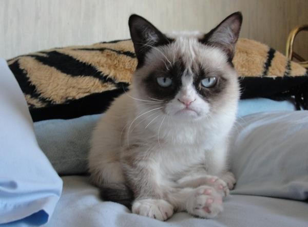 Tiny Grumpy Cat