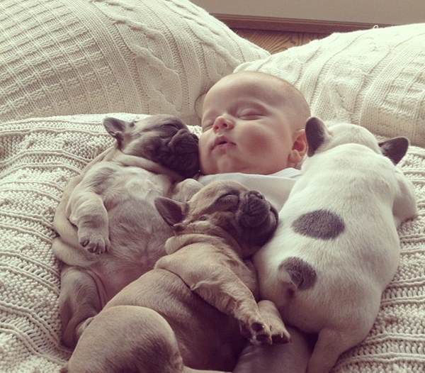 Baby And French Bulldogs