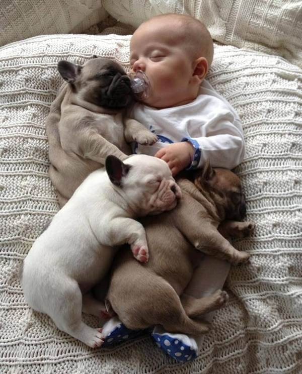Baby With French Bulldog Puppies