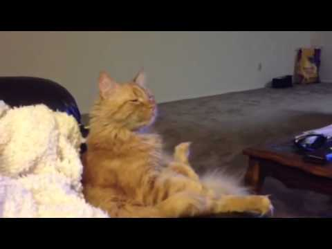 Cat Watches Hockey