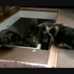 Dog & Cats Teach Their Young How To Go Down Stairs