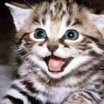 Greatest Cat Videos