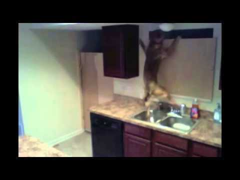 Video thumbnail for youtube video The 25 Best Dog Videos Ever – PBH2