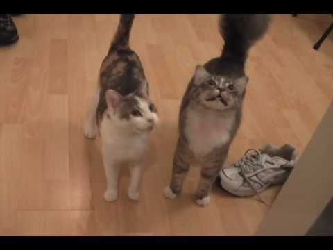 Video thumbnail for youtube video The 30 Greatest Cat Videos You Will Ever See