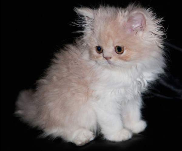 Adorable Kitten Pictures