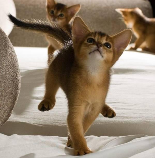 Big Eared Kittens