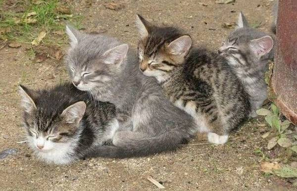 Cat Family Snuggling