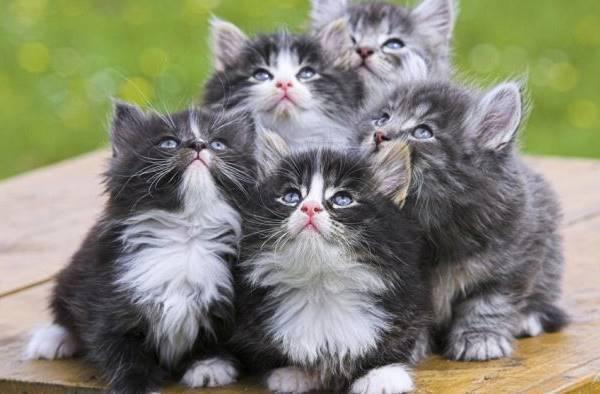 Cute Litter Of Kittens