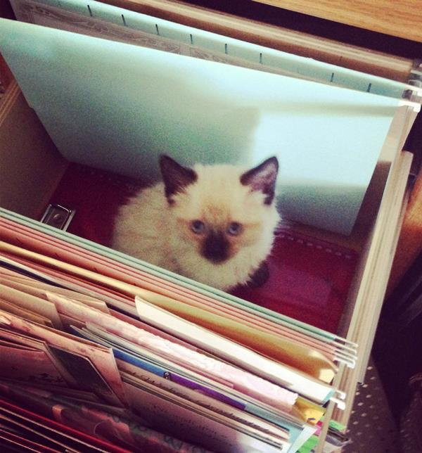 Kitten In Filing Cabinet