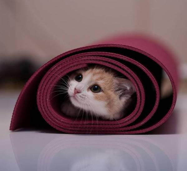 Kitten In Yoga Mat