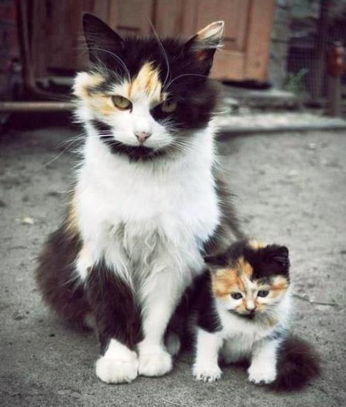 Kitten Pictures Cute Mom And Cat