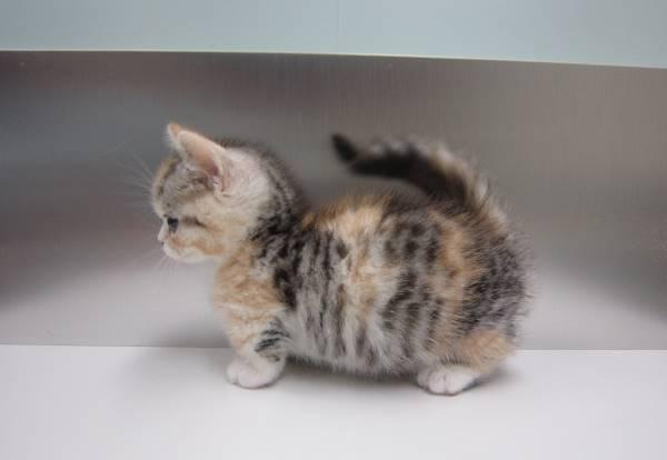 Kitten Pictures Fluffy