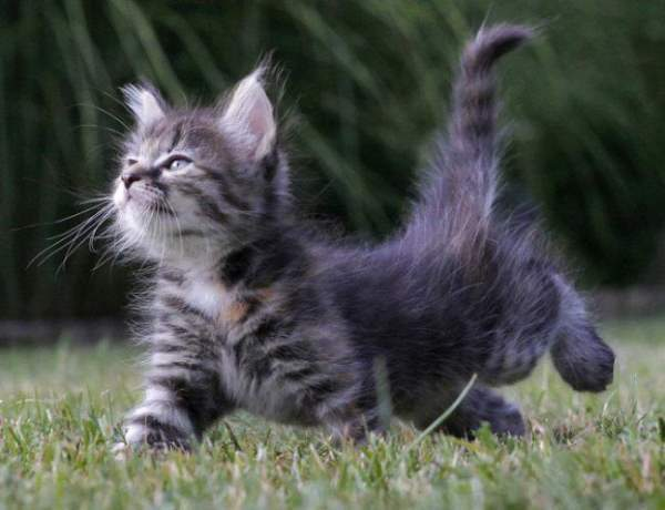 Kitten Pictures Haters Gonna Hate