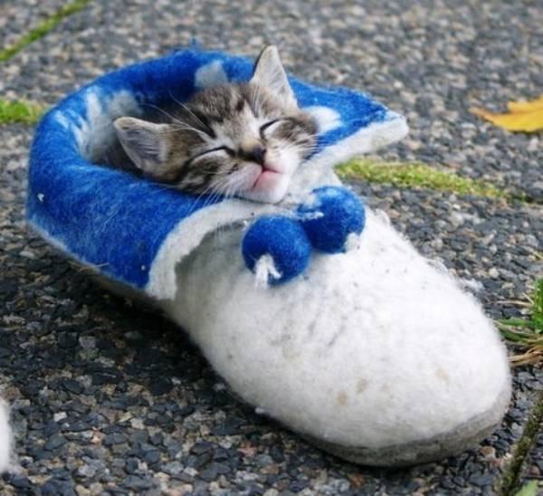 Kitten Sleeping In A Shoe