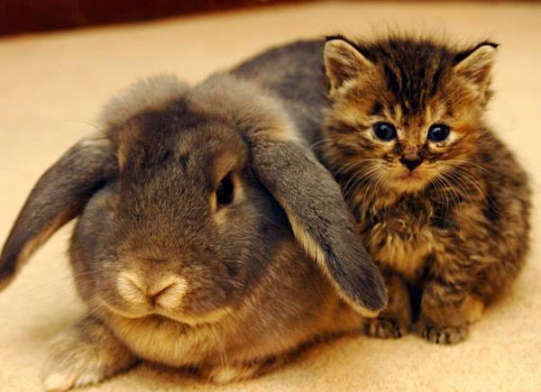Kitten With Rabbit