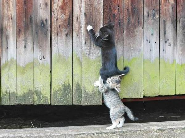 Kittens Helping Each Other