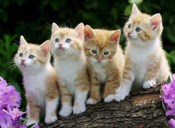 Orange Kitten Litter