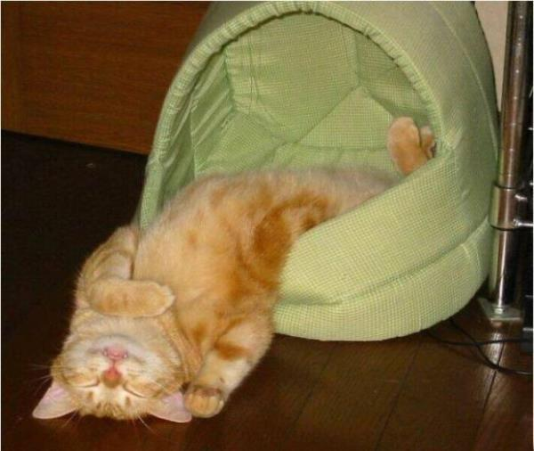 Sleeping Upside Down Kitten Pictures