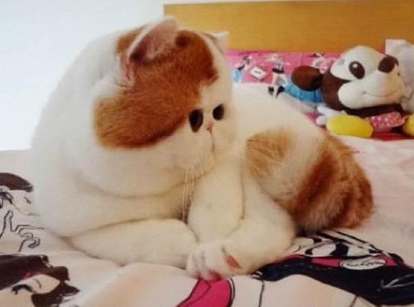 Snoopybabe Kitten