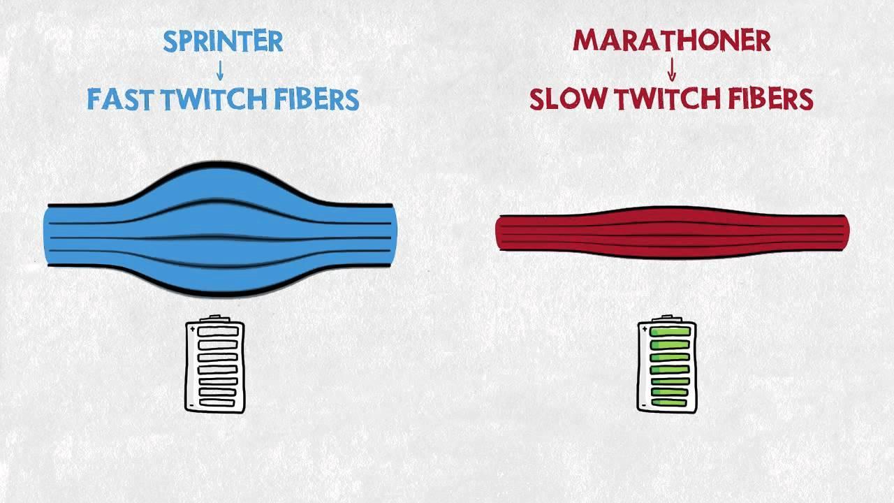 Sprinters Versus Marathoners