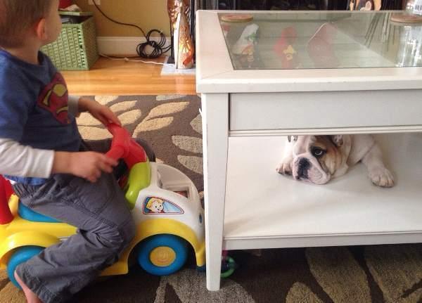 Bulldog Photos Hiding