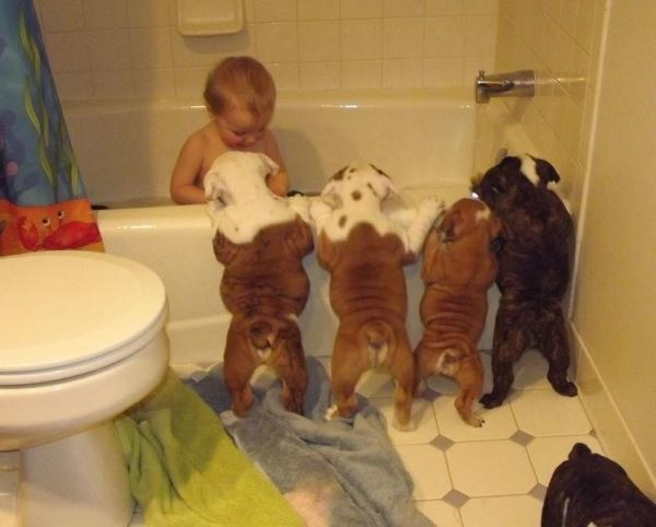 Bulldog Pictures Bath Time
