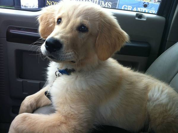 Front Seat Puppy