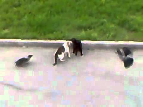 Video thumbnail for youtube video Hilarious Animals Being Jerks Videos