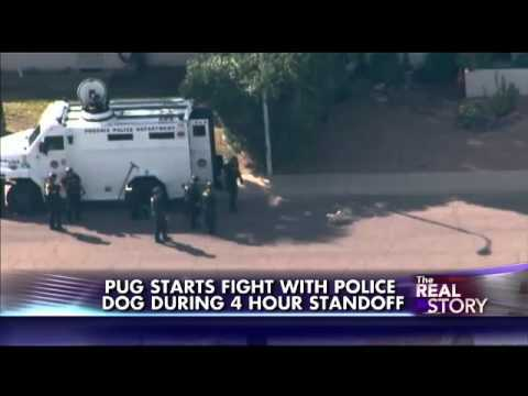 Pug Picks Fight With Entire SWAT Team… And Wins