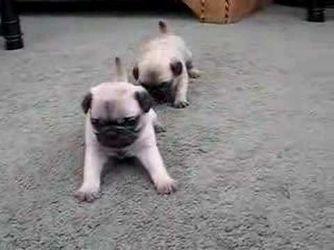 Video thumbnail for youtube video The Cutest Puppy Videos Mankind Has Ever Seen