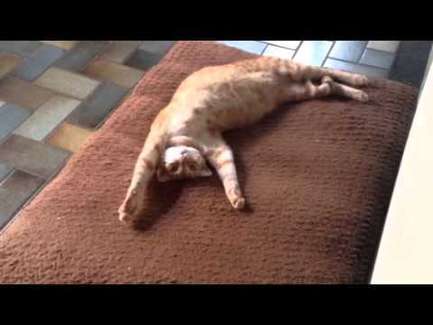 25 GIFs Of Cats Shamelessly Stealing Dogs' Beds
