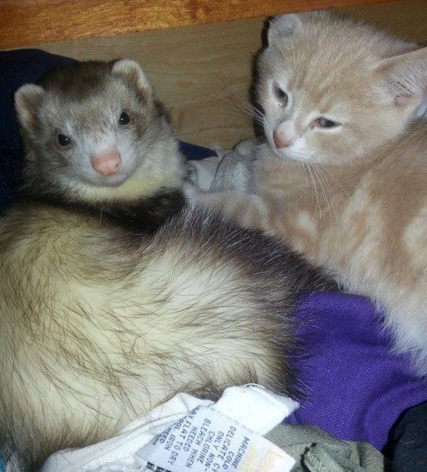 Animals Cuddling